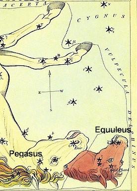 Equuleus