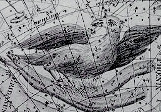 Phoenix by Johann Bode
